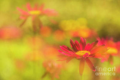 Abstract Flowers Royalty-Free and Rights-Managed Images - The dream garden by Veikko Suikkanen