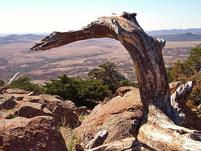Photograph - The Driftwood Dragon Of Mt Scott by Alan Lakin