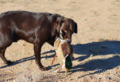 Photograph - The Duck Dog II by Donna Greene