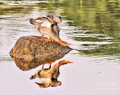 Photograph - The Duck Ducks by Debbie Stahre