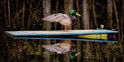 Photograph - The Duckpond 2 by Rena Trepanier