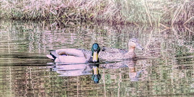 Photograph - The Duckpond  by Rena Trepanier