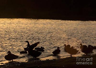 David Bowie - The Ducks  by Angel Ciesniarska