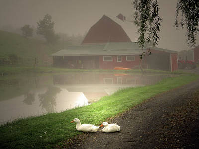 The Ducks In The Morning Fog At Maple Hill Farm Original