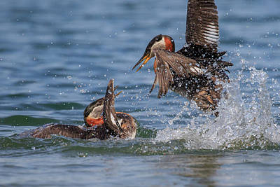 Photograph - The Duel by Gary Hall