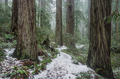 Photograph - The Dusting In The Redwoods by Greg Nyquist