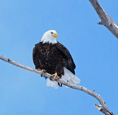 Photograph - The Eagle Eye by Laurie Pelham
