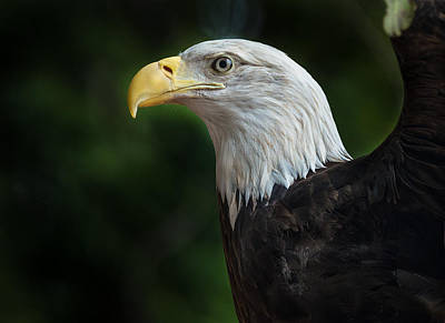 Photograph - The Eagle by Greg Nyquist