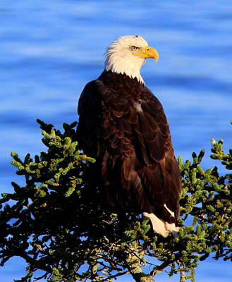 Photograph - The Eagle Has Landed 2 by Suzanne DeGeorge