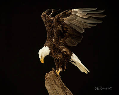 Photograph - The Eagle Has Landed by CR Courson