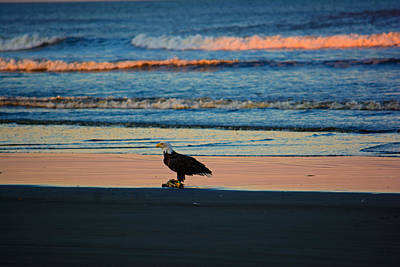 Photograph - The Eagle Has Landed by Tikvah's Hope