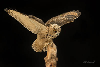 Photograph - The Eagle-owl Has Landed by CR Courson
