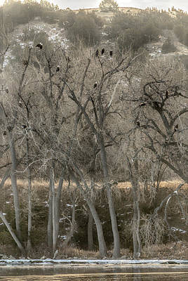 Photograph - The Eagle Tree by Susan Rissi Tregoning