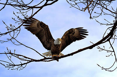 Photograph - The Eagles Landed by Susan Rissi Tregoning