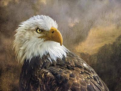 The Eagle's Stare Art Print