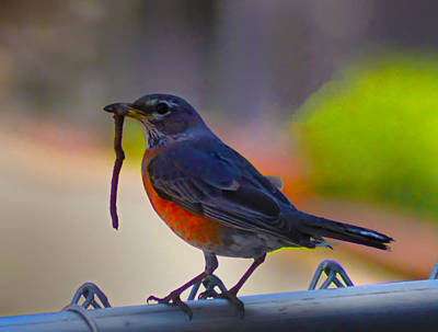 Robin Digital Art - The Early Bird by Bill Cannon