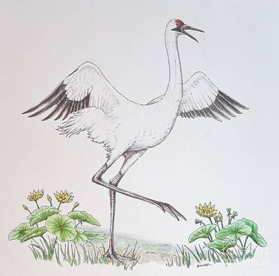 Lilies Drawings - The Early BIrd by Sue Bonnar