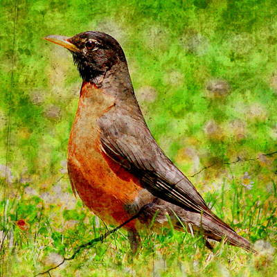 Photograph - The Early Bird . Texture . Square by Wingsdomain Art and Photography