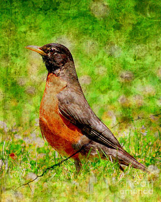 Photograph - The Early Bird . Texture . Vertical by Wingsdomain Art and Photography