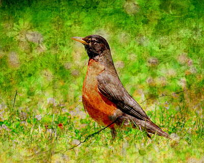 Robin Digital Art - The Early Bird . Texture by Wingsdomain Art and Photography