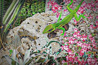 Photograph - The Eclectic Anole by Judy Kay