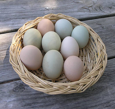 The Eggs Art Print by Janis Beauchamp