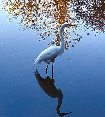 Digital Art - The Egret by Vilma Zurc
