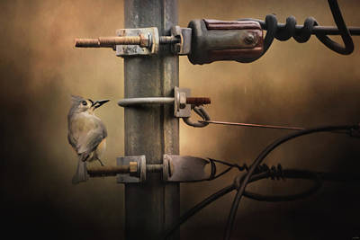 Photograph - The Electrician Songbird Art by Jai Johnson