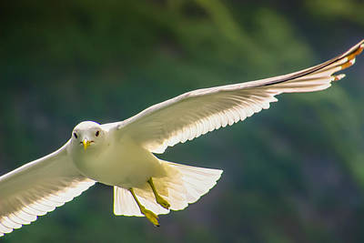 Photograph - The Elegance Of Flight by KG Thienemann