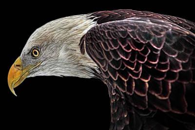 Photograph - The Elegant Bald Eagle by Debra and Dave Vanderlaan