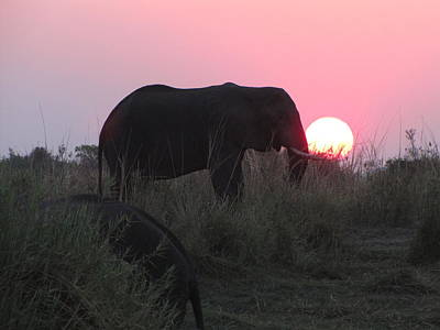 The Elephant And The Sun Art Print