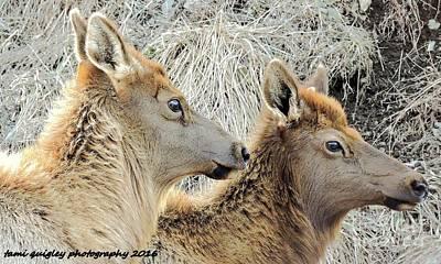 The Elk Of Winter  Art Print