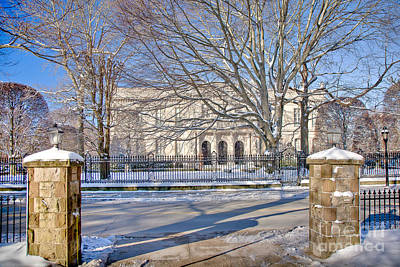 Photograph - The Elms In Winter by Susan Cole Kelly