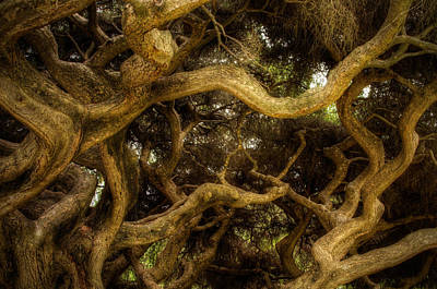 Leaf Vine Ring Photograph - The Elven Forest by Joshua Spiegler