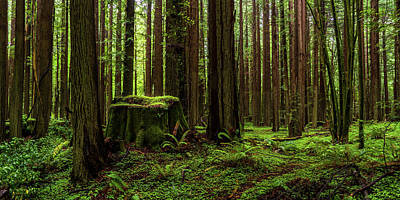 Photograph - The Emerald Forest by TL Mair