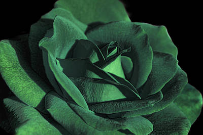Photograph - The Emerald Green Rose Flower by Jennie Marie Schell