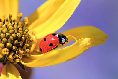 Ladybug Photograph - The End by Donna Kennedy