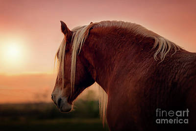 The End Of A Long Day At The Ranch Art Print by Tamyra Ayles