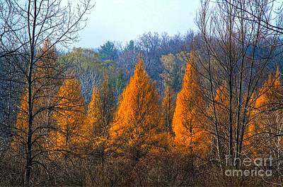Autum Abstract Photograph - The End Of Another Season by Robert Pearson
