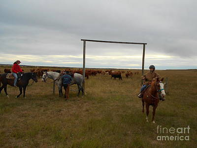 Cattle Drive Photograph - The End Of The Cattle Drive by Abelone Petersen