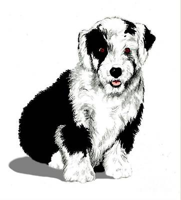 Drawing - The English Shepherd by Cheryl Poland