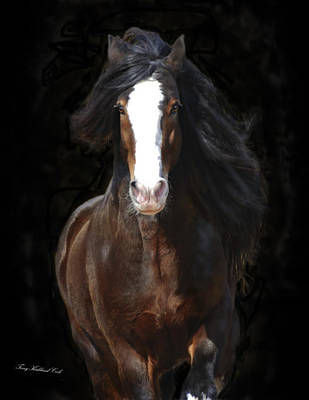 Gypsy Vanner Horse Photograph - The English Shire As Art by Terry Kirkland Cook