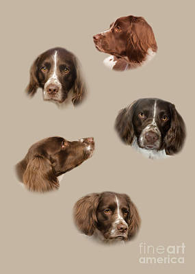 Shed Digital Art - The English Springer Spaniel by Linsey Williams