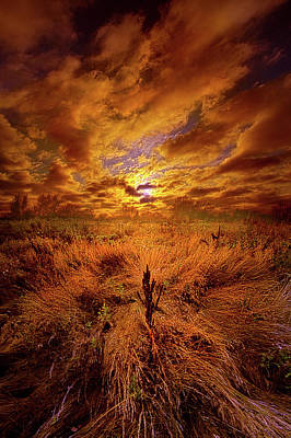 Photograph - The Entirety Of The Quest by Phil Koch