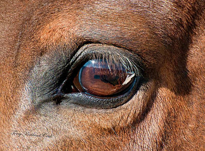 Gypsy Vanner Horse Photograph - The Equine Eye by Terry Kirkland Cook