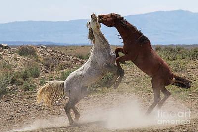 Photograph - The Equine Jitterbug by Jim Garrison