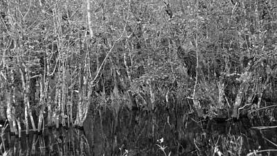 Photograph - The Everglades Black And White by Carol  Bradley