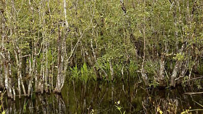 Photograph - The Everglades by Carol  Bradley