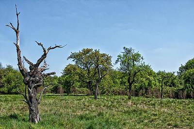 Photograph - The Ex-tree by Rabiri Us
