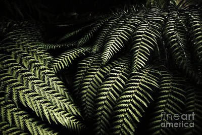 Plants Photograph - The Exotic Dark Jungle by Jorgo Photography - Wall Art Gallery